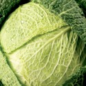 Savoy Cabbage Vertus 500 seeds