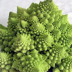 Cauliflower Romanesco 200 seeds