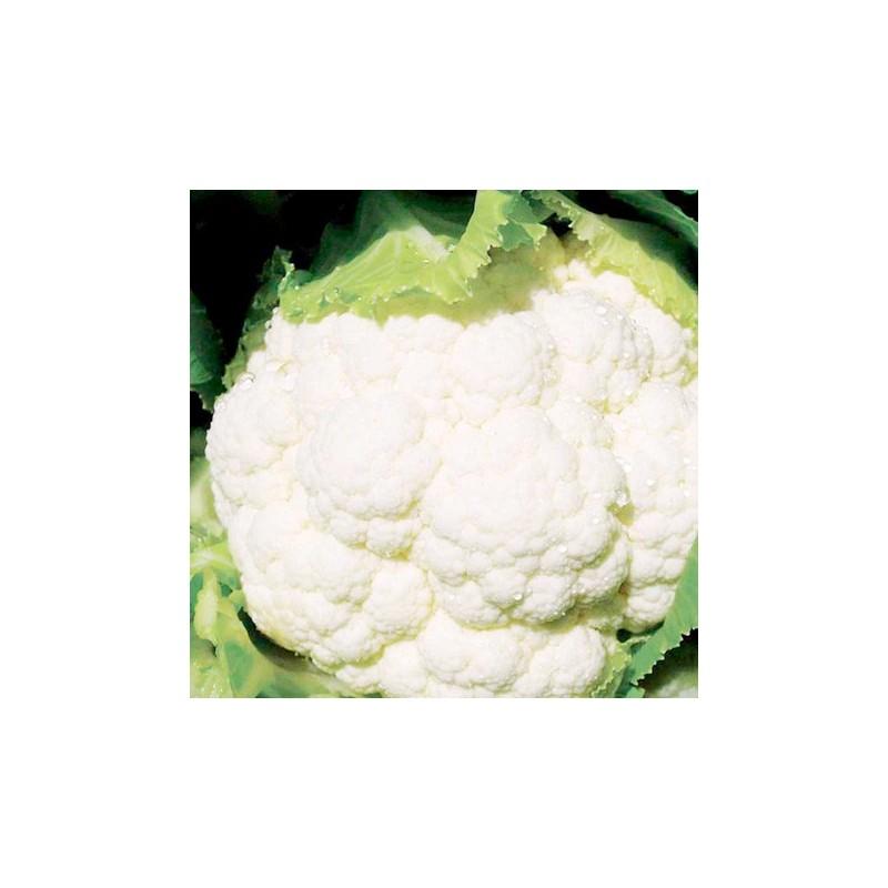 Cauliflower Clapton F1 20 seeds