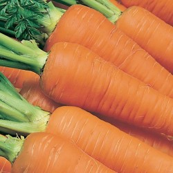 Carrot Autumn King 2000 seeds