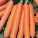 Carrot Nantes 2000 seeds