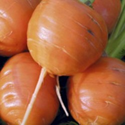 Carrot Paris Market Atlas 1000 seeds
