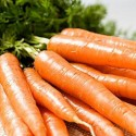 Carrot Resistafly F1 250 seeds