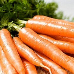 Carrot Resistafly F1 250 seeds