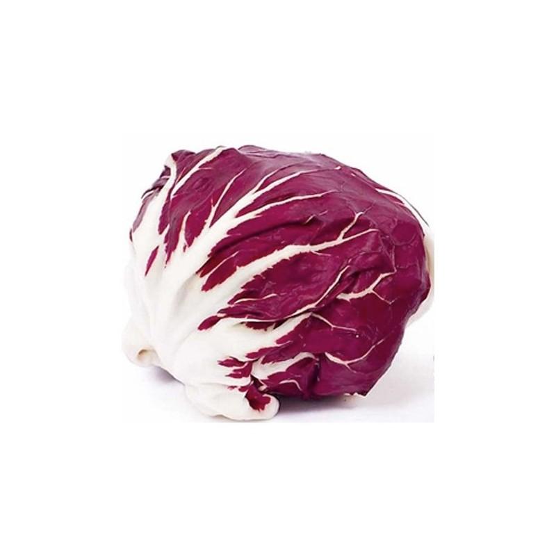Radicchio Palla Rossa 500 seeds