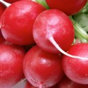 Radish Cherry Belle 1000 seeds