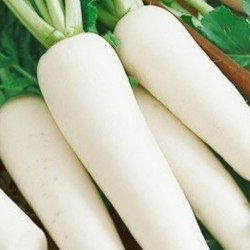 Radish Long White Icicle 1000 seeds