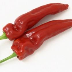Pepper/Paprika Karmin 20 seeds