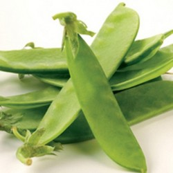 Mangetout Pea Oregon Sugar Pod 200 seeds