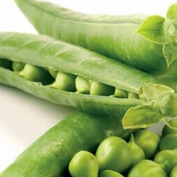 Pea Douce Provence 200 seeds