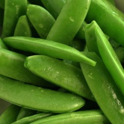 Sugar Snap Pea Delikett 200 seeds
