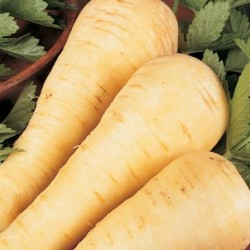 Parsnip Tender and True 500 seeds