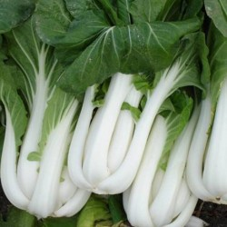Pak Choi White 150 seeds