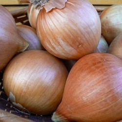 Onion Ailsa Craig 300 seeds
