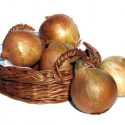 Onion Bedfordshire Champion 300 seeds
