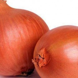Onion Rijnsburger 300 seeds