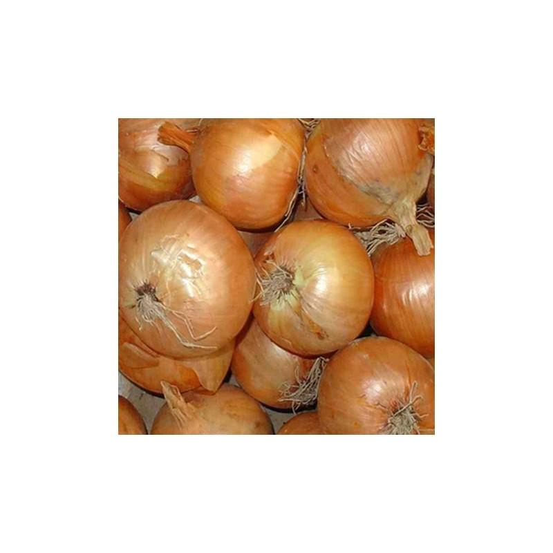 Onion Stuttgarter Giant 300 seeds