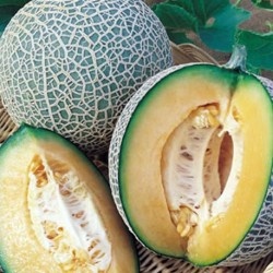 Melon Blenheim Orange10 seeds