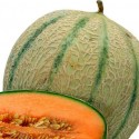 Melon Charentais 10 seeds