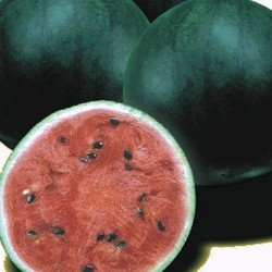 Watermelon Sugar Baby 50 seeds