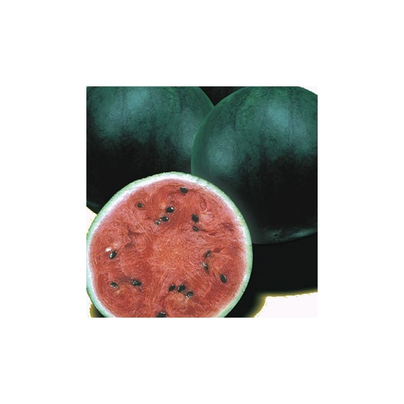 Watermelon Sugar Baby 50 seeds