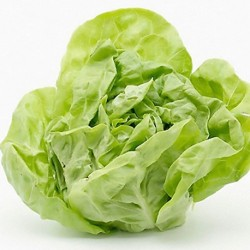 Lettuce All The Year Around 500 seeds