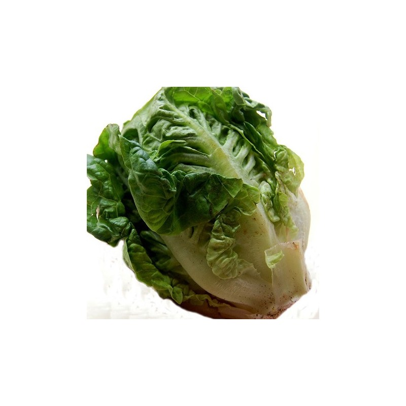 Lettuce Cos Little Gem 500 seeds