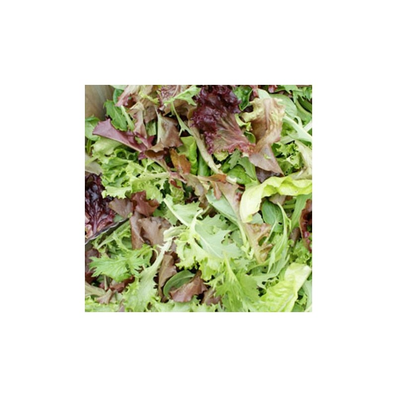 Lettuce Mixed Baby Leaf 300 seeds