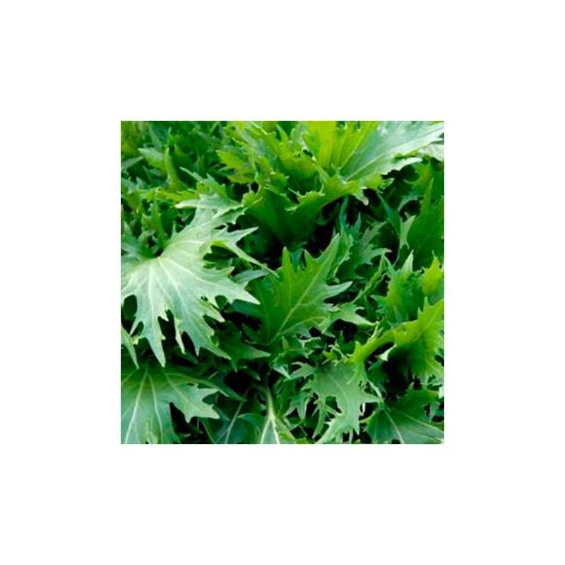Mizuna 400 seeds