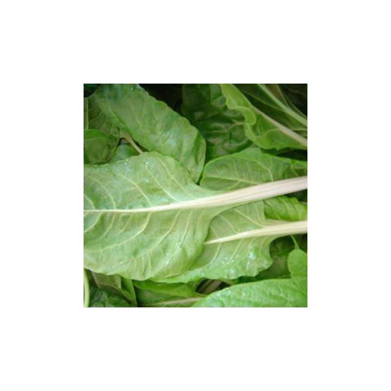 Perpetual Spinach 200 seeds