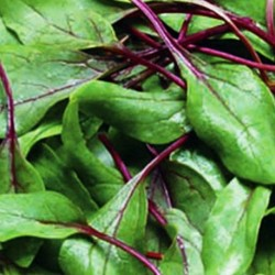 Spinach Reddy 300 seeds