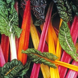 Swiss Chard Rainbow Mixed 200 seeds