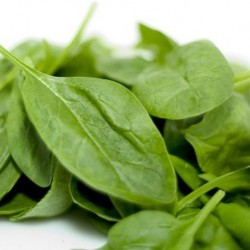 Spinach Medania 300 seeds