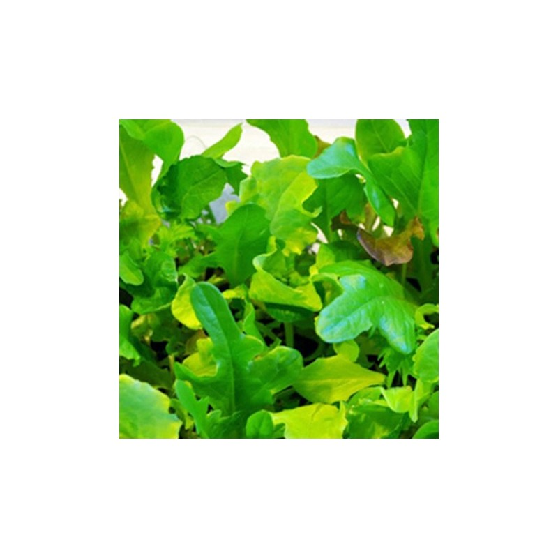 Mixed Oriental Leaves 1000 seeds