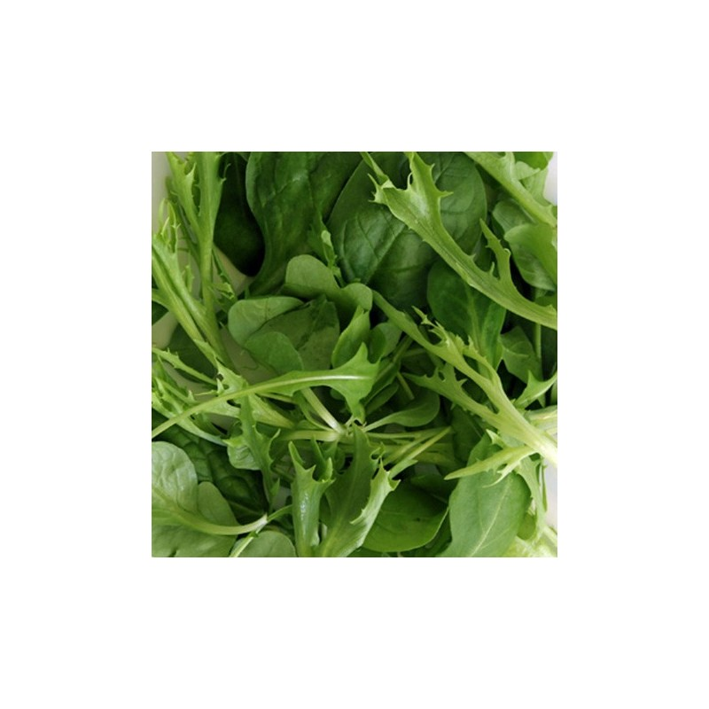Mixed Spicy Leaves 1000 seeds