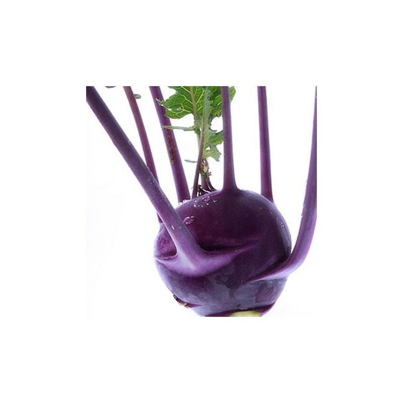 Kohlrabi Tartos Kek (Keeping Blue) 500 seeds