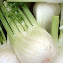 Florence Fennel Sweet Florence 300 seeds