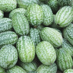 Cucamelon 15 seeds