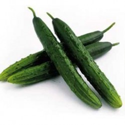 Cucumber Marketmore 76 100 seeds