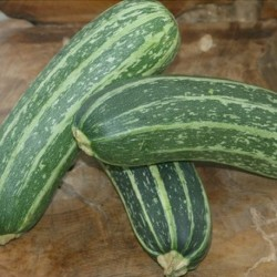 Marrow Long Green Bush 20 seeds