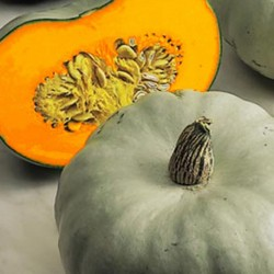 Winter Squash - Crown Prince F1 5 seeds