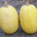 Winter Squash - Spaghetti 20 seeds