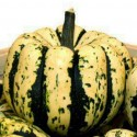 Winter Squash Sweet Dumpling 15 seeds
