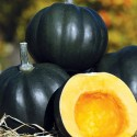 Winter Squash - Honey Bear F1 8 seeds