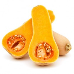 Winter Squash - Waltham Butternut 20 seeds