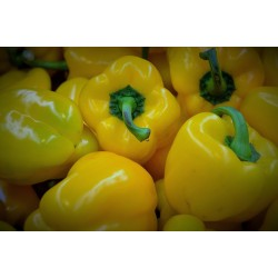 Sweet Pepper D'asti Giallo 50 seeds