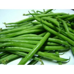 Climbing French Bean Blue Lake 40 seeds