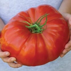 Tomato Gigantomo F1 5 seeds