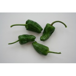 Hot Pepper Padron 10 seeds