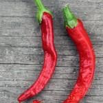 First chilli harvest